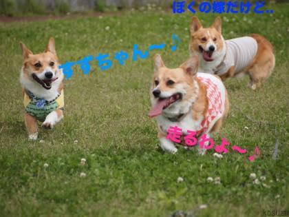 3_20150422083301e28.jpg
