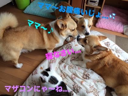 3_201505101034446b2.jpg