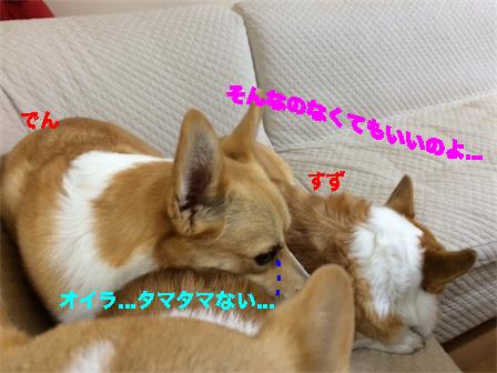 4_20141217095504ef6.jpg