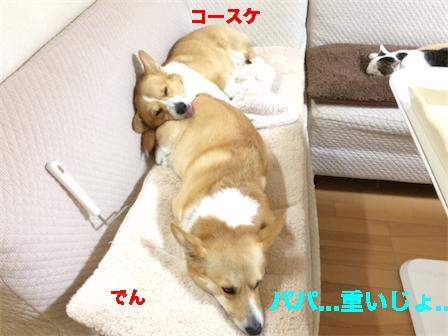 4_20150118220221e5f.jpg