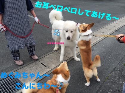 5_20150519110323e0e.jpg