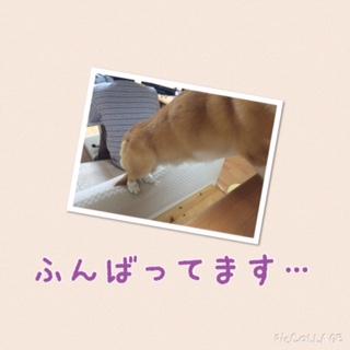IMG_4625.jpg