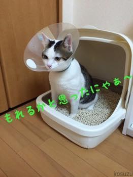 th_IMG_4871.jpg