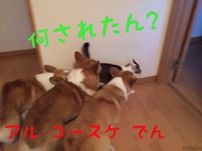 th_IMG_4939.jpg