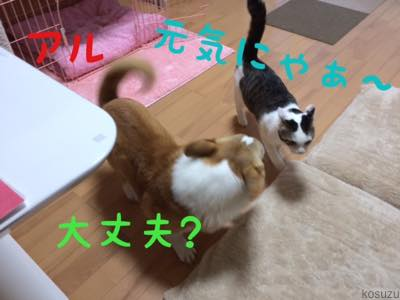 th_IMG_4940.jpg