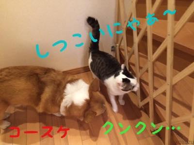 th_IMG_4941.jpg