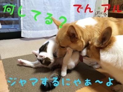 th_IMG_4942.jpg
