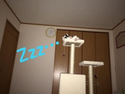 th_IMG_4955.jpg
