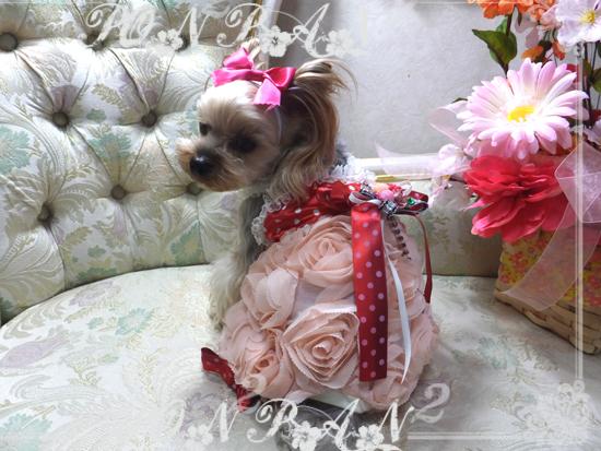 buro2_20150104221941095.jpg