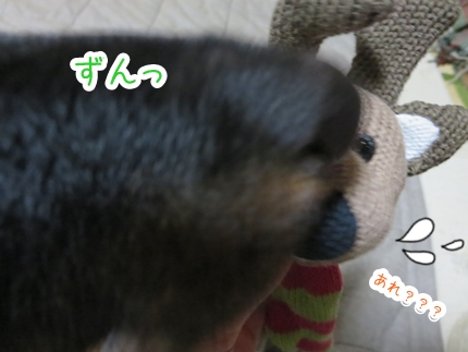 IMG_1226_4.jpg