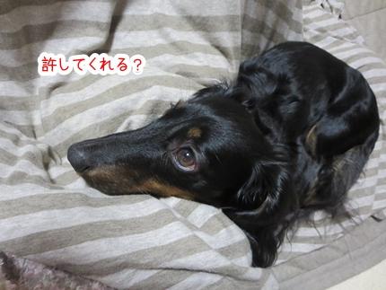 IMG_1230_3.jpg