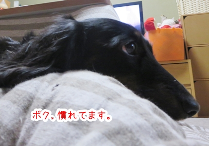 IMG_270125_1.jpg