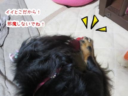 IMG_270508_2.jpg