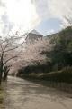 桜_2015_07