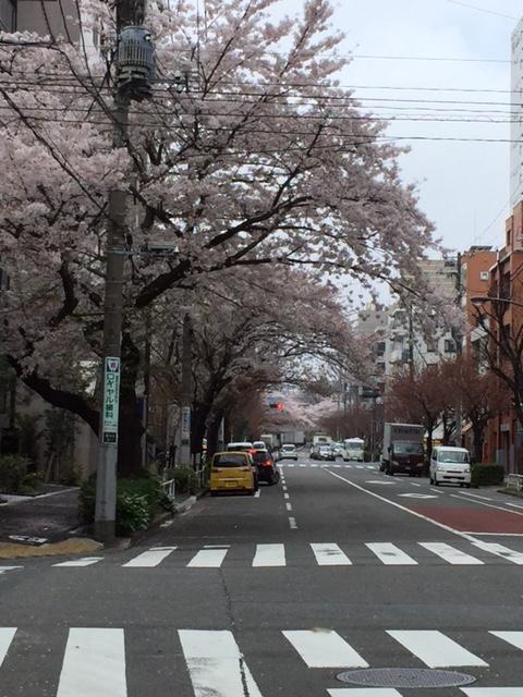 品川別宅付近の桜