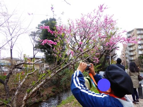 東京旅行2015春-020