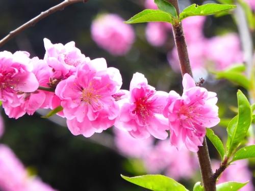 東京旅行2015春-021