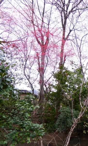 東京旅行2015春-023
