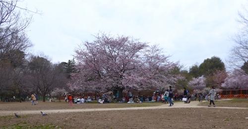 東京旅行2015春-028