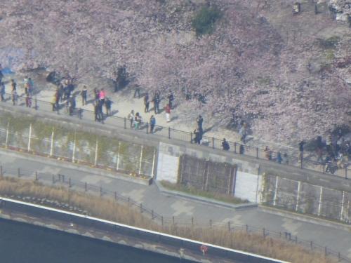 東京旅行2015春-081