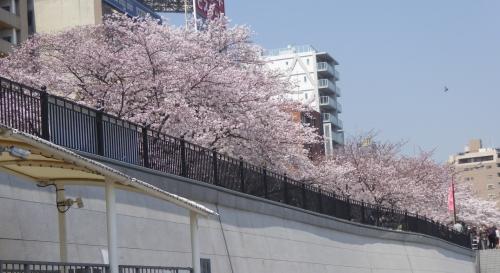 東京旅行2015春-108