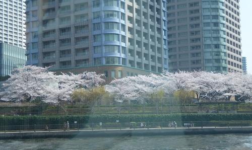 東京旅行2015春-118