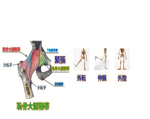 恥骨大腿靭帯480