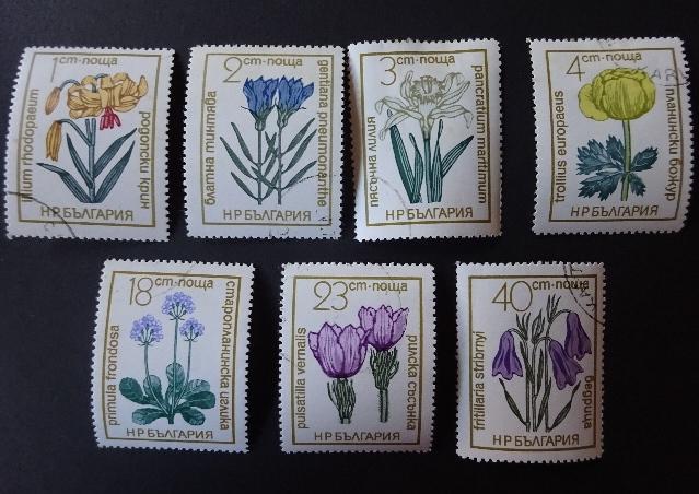ブルガリア花