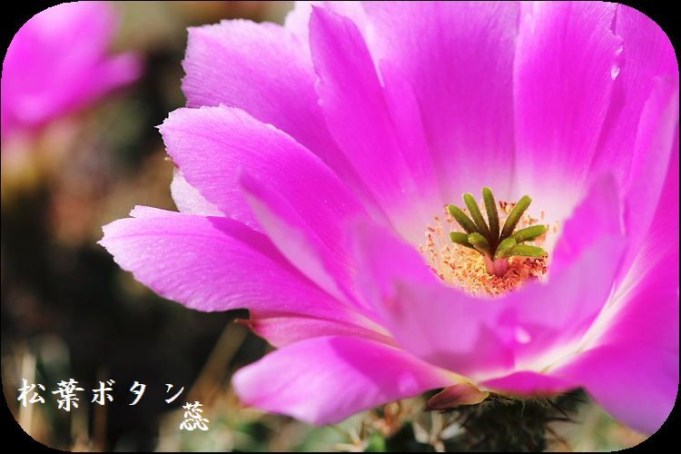 IMG_BB7991A3