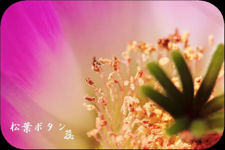 IMG_BB7995A5