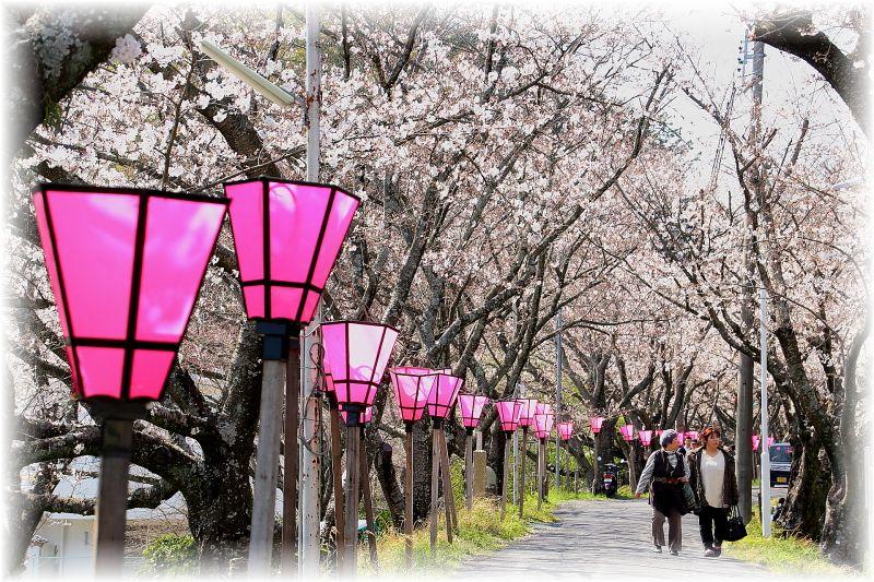 金毘羅さん桜祭り0002