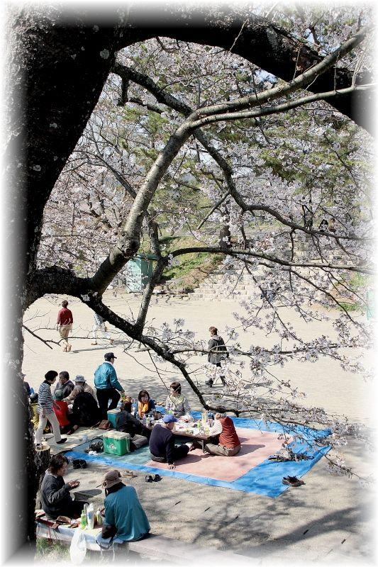 金毘羅さん桜祭り0001