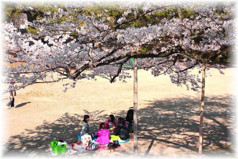 金毘羅さん桜祭り0027