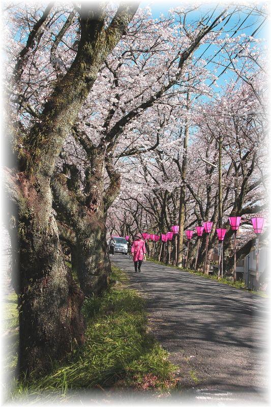 金毘羅さん桜祭り0025