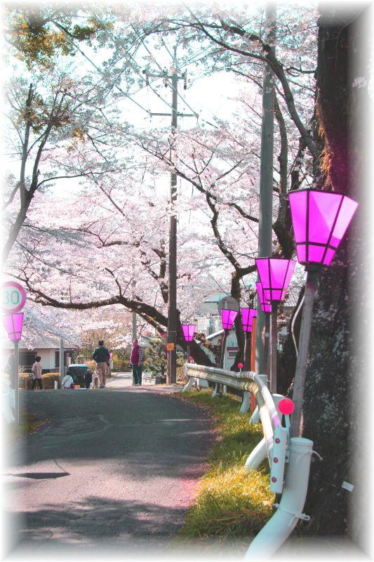 金毘羅さん桜祭り0008