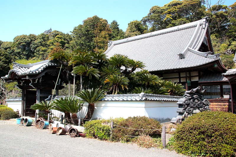 お寺さん ソテツ0236