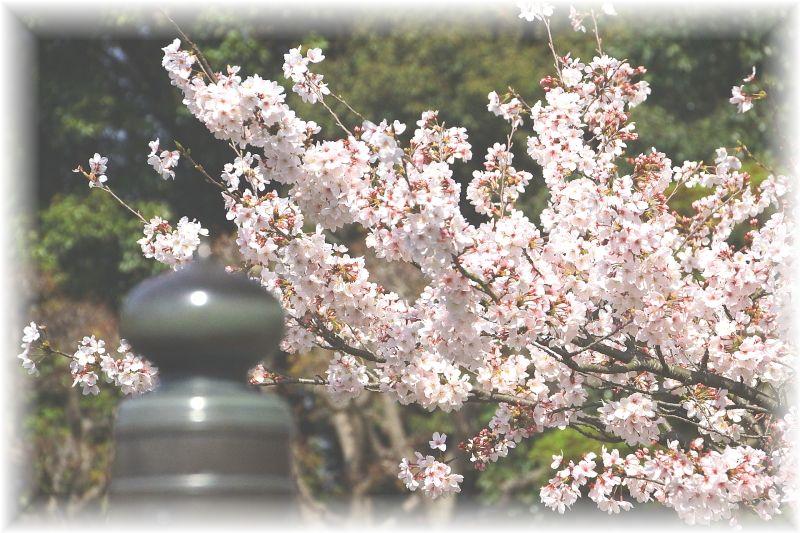 吉田町、小山城0097