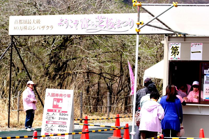 本栖湖芝サクラ祭り0424
