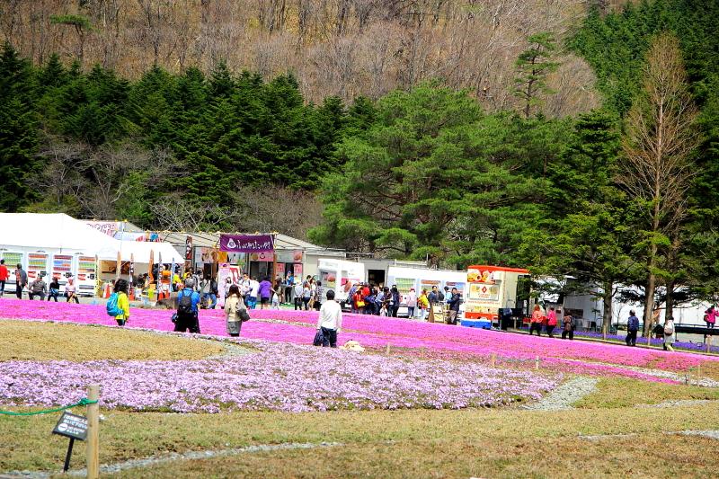 本栖湖芝サクラ祭り0435