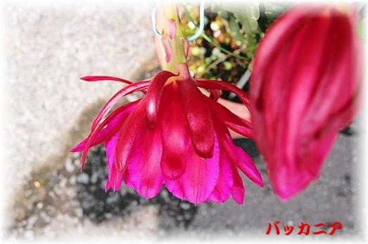 IMG_0012_201505171525115bc.jpg