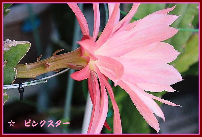 IMG_0013_201505140850576e9.jpg