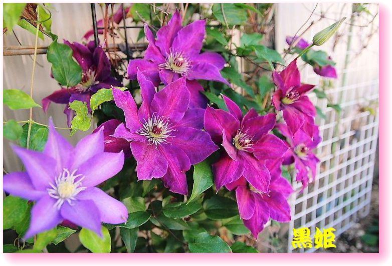 IMG_0015_20150502162943a5c.jpg