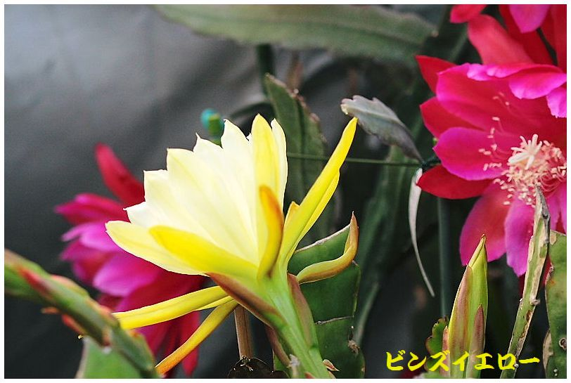 IMG_0016_2015052008484949c.jpg