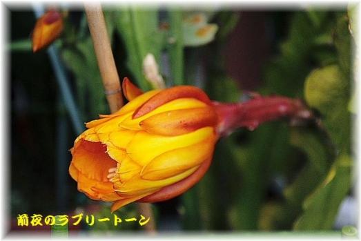 IMG_0019_20150507081934739.jpg