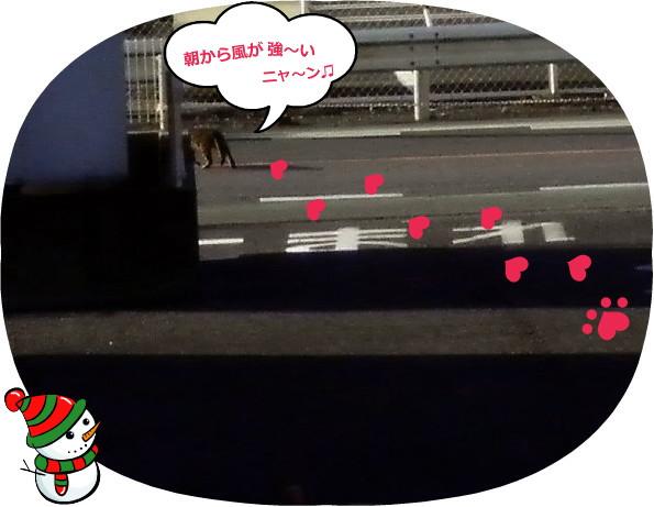 花ブ20150120-3