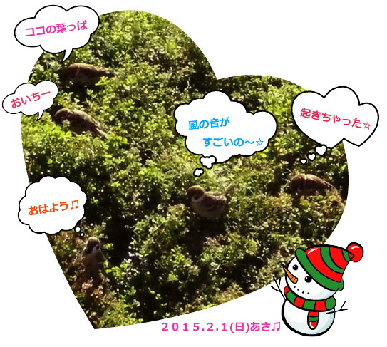 花ブ20150201-2