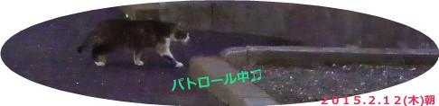 花ブ20150212-1