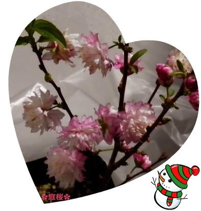 花ブ20150305-2