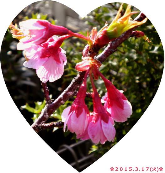 花ブ20150317-3