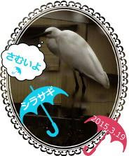 花ブ20150320-1